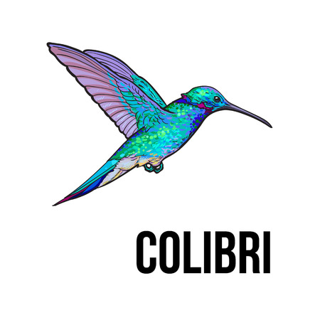 Hand drawn sapphire hummingbird, colorful sketch style vector illustration isolated on white background. Hand drawing of turquoise humming bird, scientific ornithological illustrationのイラスト素材