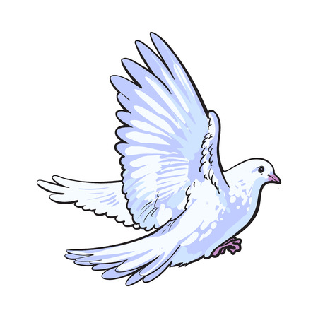 Free flying white dove, sketch style vector illustration