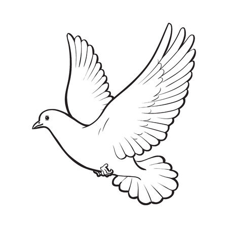 Ilustración de Free flying white dove, sketch style vector illustration isolated on white background. Realistic hand drawing of white dove, pigeon flapping wings, symbol of love, romance and innocence, marriage icon - Imagen libre de derechos