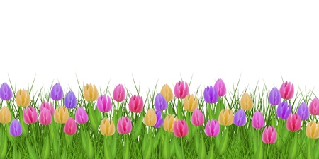 Illustration pour Spring floral border with colorful tulips on fresh green grass isolated on white background - decorative frame with beautiful seasonal flowers on greenery in vector illustration. - image libre de droit