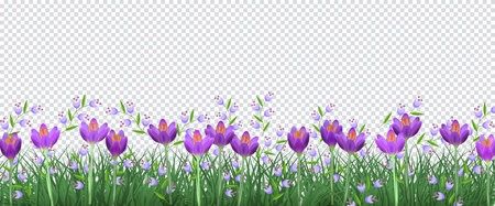 Illustration pour Spring floral border with bright purple crocuses and little blue wild flowers on fresh green grass on transparent background - decorative frame with blooms and greenery in vector illustration. - image libre de droit