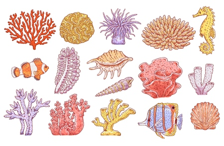 Illustration pour Vector tropical sea underwater corals, fish, shell and scallop set. Aquatic reef animals and plants. Hand drawn ocean flora and fauna collection. Isolated illustration - image libre de droit