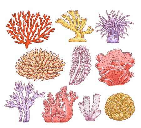 Illustration pour Set of various types of corals, aquarium underwater spongy plants and animals. Ocean marine underwater collection of flora and fauna. Hand drawn vector sketch illustration of sea corals. - image libre de droit