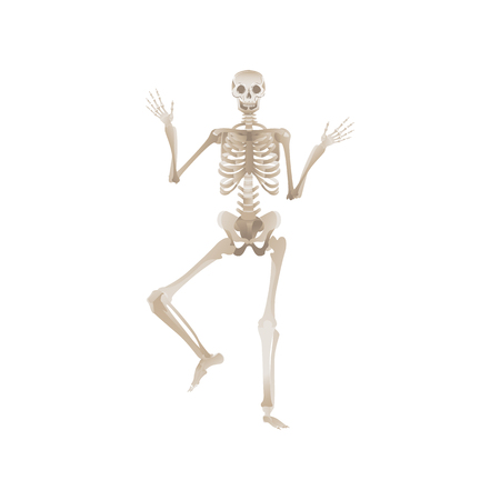 Illustration pour Vector funny human skeleton dancing. Body anatomy with skull, bones having fun. Dead man moving in funny position. halloween holiday, scary design decoration. - image libre de droit