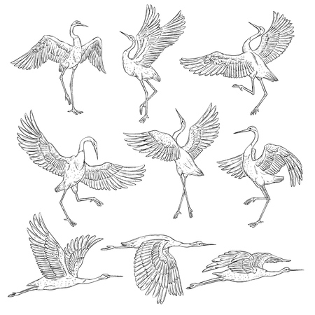 Ilustración de Set of black and white japanese cranes, birds in different positions and poses. Coloring book page of traditional asian painting elements, flat vector illustration isolated on white background. - Imagen libre de derechos