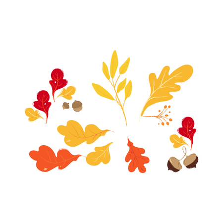 Illustration pour Set of red, orange and yellow autumn and fall oak forest leaves and brown acorns. Isolated hand drawn vector illustration of fall and autumn leaves. - image libre de droit