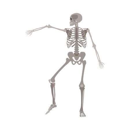 Illustration pour Human skeleton dancing, medical body anatomy model with arm bone raised in dynamic motion, realistic cartoon flat vector illustration isolated on white background - image libre de droit