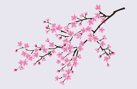 Illustration pour Branch of blooming sakura with flowers, cherry blossom, floral spring concept. Japanese and asian sakura tree flowers. Realistic vector illustration of sakura. - image libre de droit
