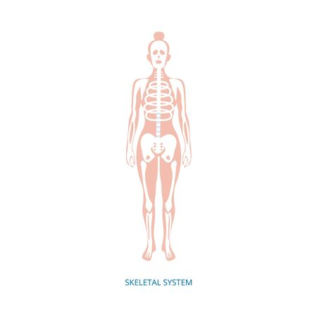 Illustration pour Human female skeletal system infographic element, vector illustration isolated on white background. Biological scientific educational placard or banner on medical topic. - image libre de droit