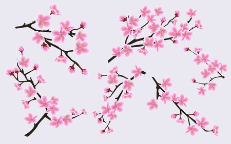 Illustration pour Cherry branches with blooming pink spring flowers set of vector illustrations isolated on background. Japanese sakura blossom design element for wedding and invitation cards. - image libre de droit