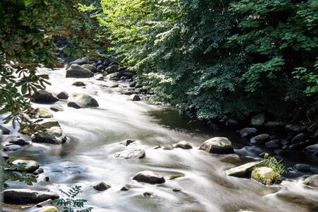 Wildly romantic river in summer
