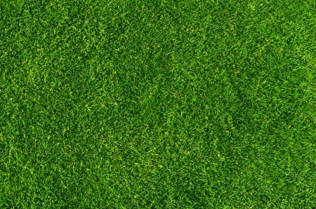 Close-up on natural lawn texture