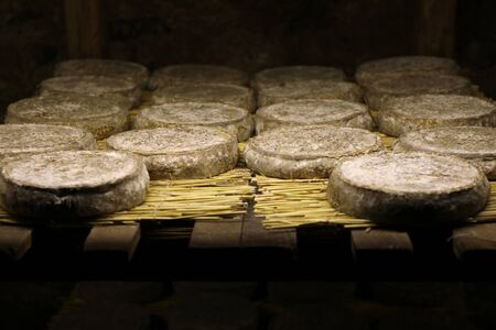 Photo for Traditional refining of Saint Nectaire cheeses in a cellar. Puy de dome, Auvergne, France - Royalty Free Image