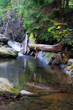riverbed with calm water. nature