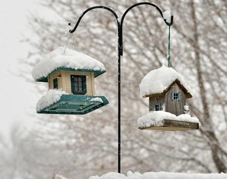 bird feeders in the winter park