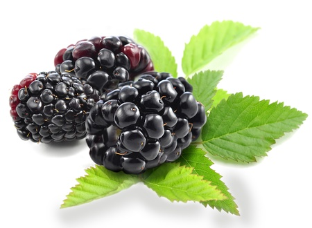 fresh blackberries with leaves on white background