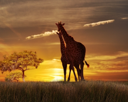 Two Giraffes Against The Sun