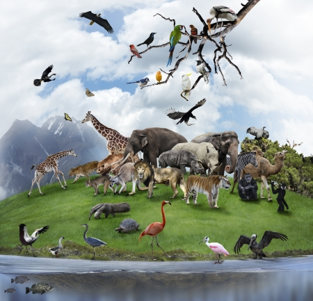 Nature Collage With  Wild Animals And Birds