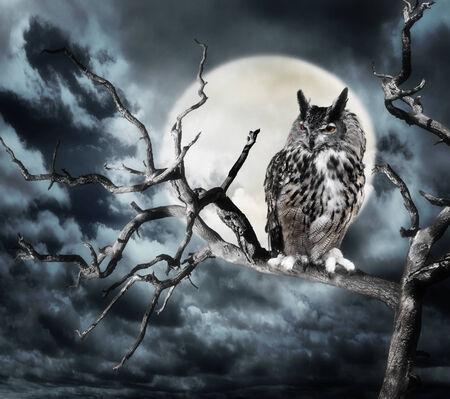 Owl Perching On A Tree Against The Moon