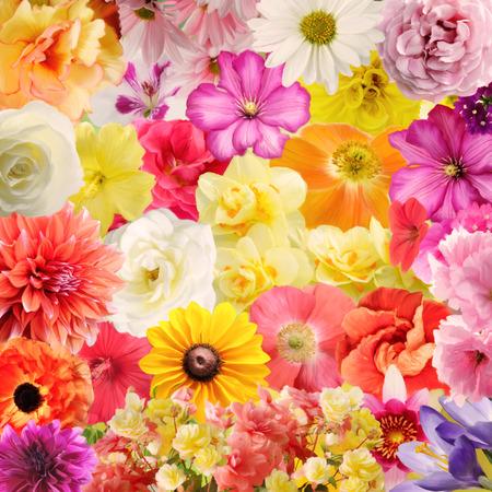 Photo pour Digital Painting Of Colorful Floral Background - image libre de droit