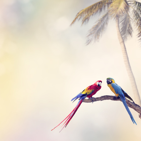 Two Parrots Perch on a Log