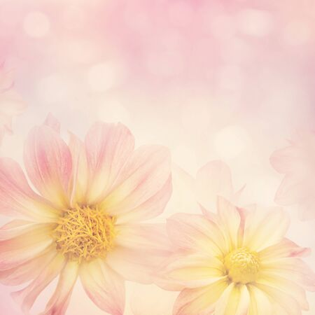 Photo for Colorful Dahlia flowers for background, soft focus - Royalty Free Image