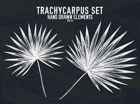Vector collection of hand drawn chalk trachycarpus stock illustration