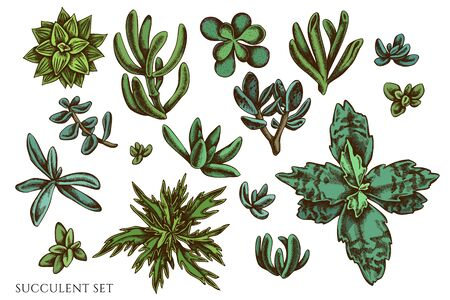 Illustration for Vector set of hand drawn colored succulent - Royalty Free Image