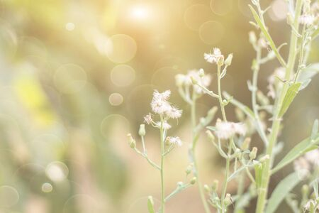 Photo for Forest flowers grass meadow with wild grasses,Macro image with small depth of field,Blur background  - Royalty Free Image