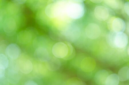 Foto de Blurred green Bokeh natural tree in parks with bight sunlight - Imagen libre de derechos