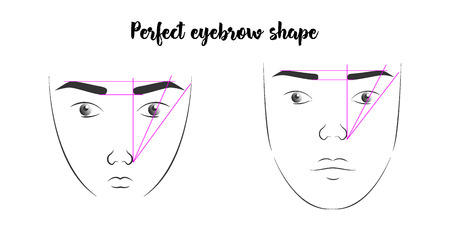 a poster with the faces of women with the correct form of eyebrows. a diagram showing the perfect shape of eyebrows