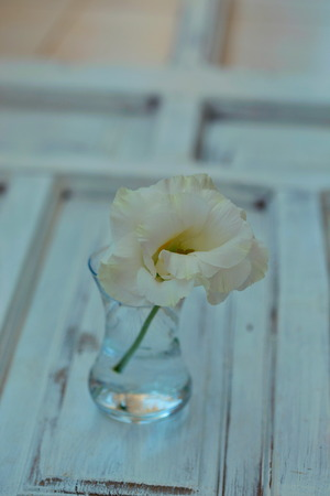 White lisianthus in small glass over white rustic background shot with shallow depth of field