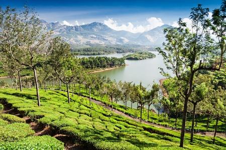 Photo pour Tea plantation in Munnar, Kerala state, India  - image libre de droit