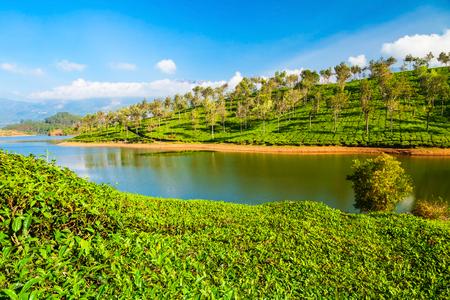 Photo pour Amazing landscape view of tea plantation and lake nature background - image libre de droit