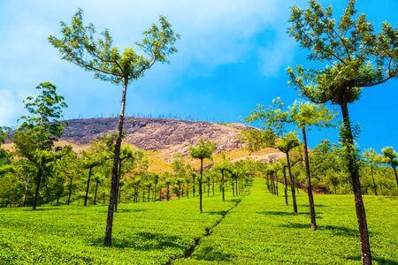 Photo pour Amazing landscape view of tea plantation nature background - image libre de droit