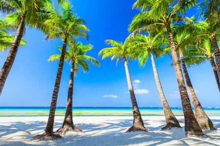Photo pour Tropical vacation at white sand beach with coconut palm trees in Boracay island in Philippines - image libre de droit