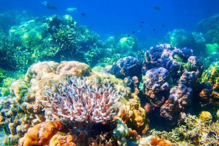 Photo pour Underwater coral reef tropical sea view landscape - image libre de droit