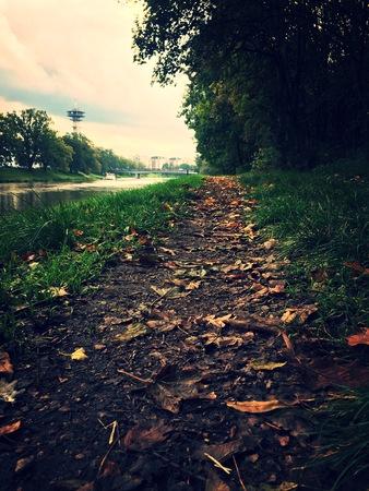Autumn roadの素材 [FY31088107950]