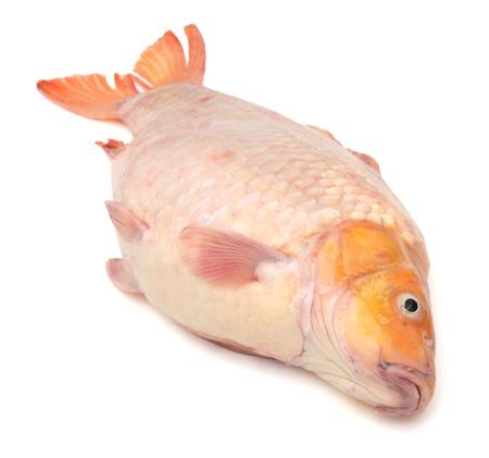 Fish carp isolated on white