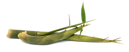 Bamboo shoots isolated on a white background