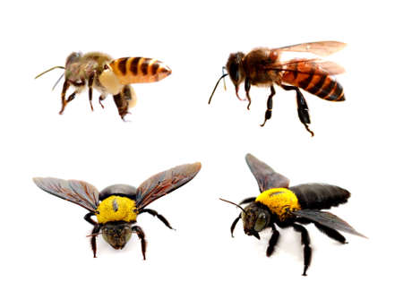 Photo for Various bees on white background. Wing, sting. - Royalty Free Image