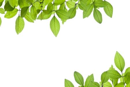 Photo pour Green leave on white background - image libre de droit
