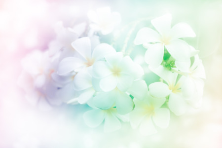 flower background,