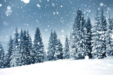 Photo for Christmas background with snowy fir trees and heavy snowfall - Royalty Free Image