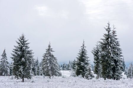 Photo for Winter landscape with snow-covered pine and fir trees. Christmas concept - Royalty Free Image