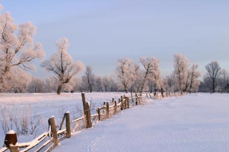 Photo pour a long walk in nature snowy Russian winter - image libre de droit