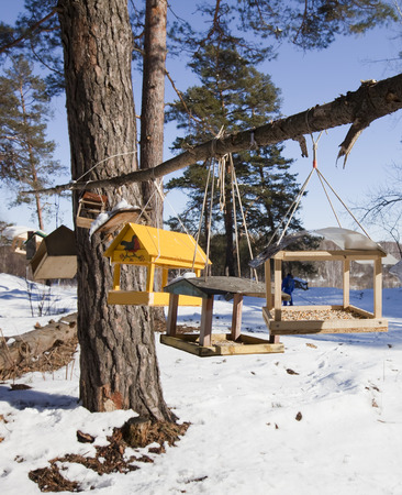 winter landscape trough for animals and birds in a pine forest bright sunny day
