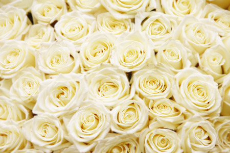 Foto de isolated close-up of a huge bouquet of white roses - Imagen libre de derechos