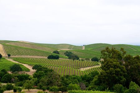 Vineyards in the rolling hills of Napa, California.