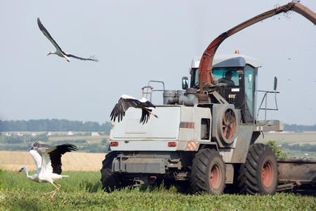 Combine on a field and the scared storks